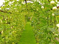 V8G1  Gourd Tunnel, Helmingham Hall Gardens, Suffolk, UK