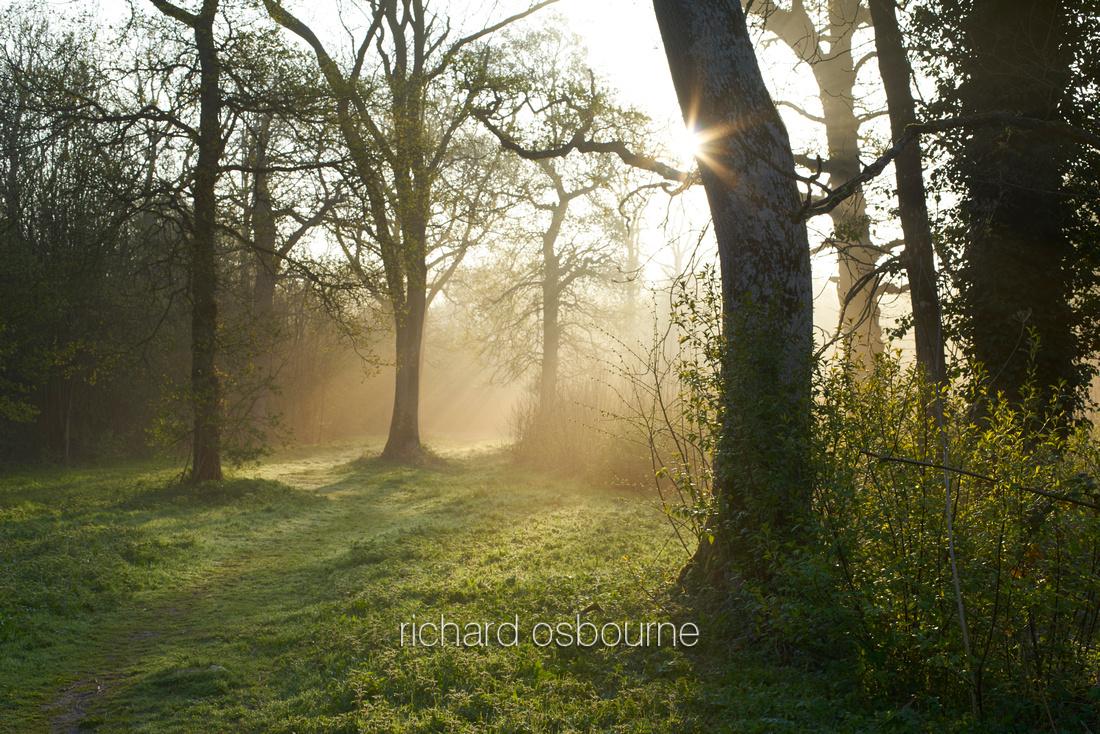 Dawn, NWT Wayland Wood, Norfolk, UK