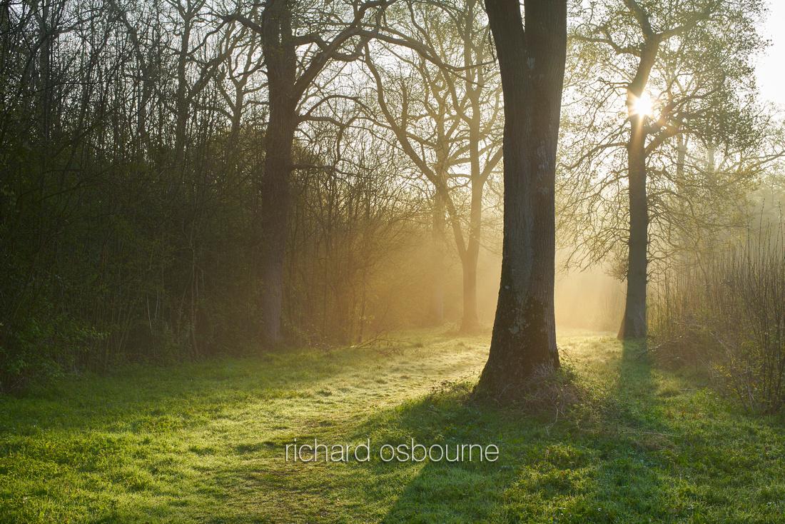 V9F10  Dawn, NWT Wayland Wood, Norfolk, UK